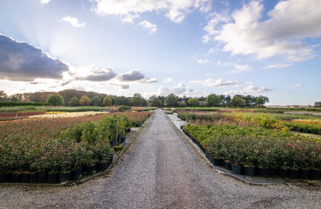 Stima-Plant kweekt sierheesters en grassen. Geïnteresseerd in ons eigen aanbod? Neem contact op voor meer informatie.