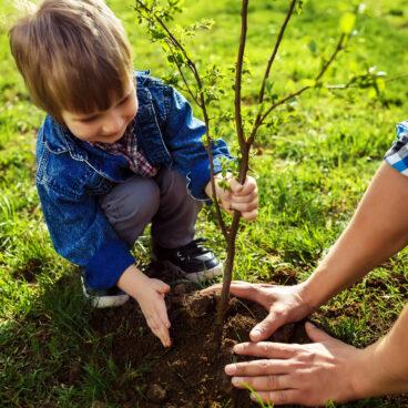 Zelf bomen planten? Met deze tips krijg je het beste resultaat