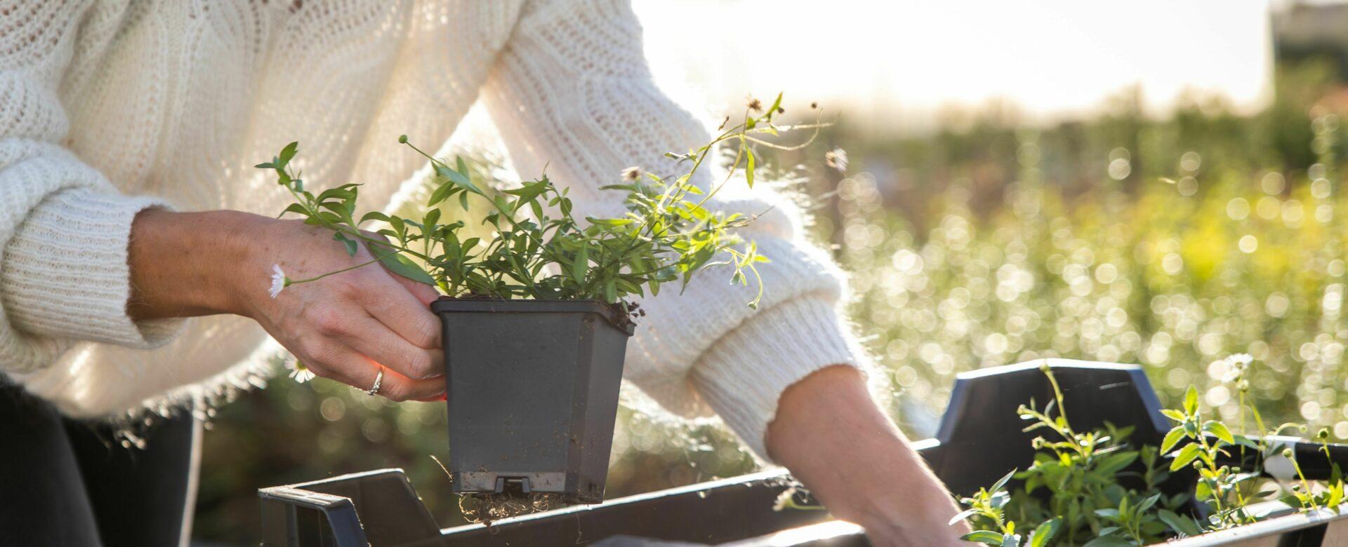 Alles in huis voor de tuinliefhebber
