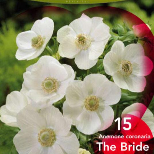 Anemone hybr. 'The Bride'