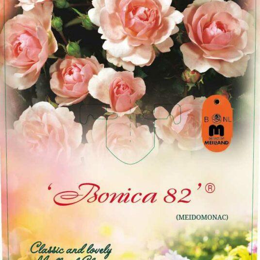 Rosa 'Bonica'®