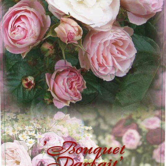 Rosa 'Bouquet Parfait'® (= 'lenfoba'®)