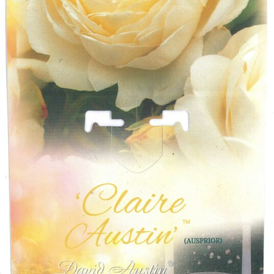 Rosa 'Claire Austin'® (david austin®)
