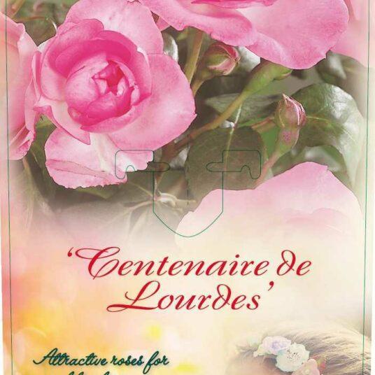 Rosa 'Centenaire de Lourdes' (= 'delge')