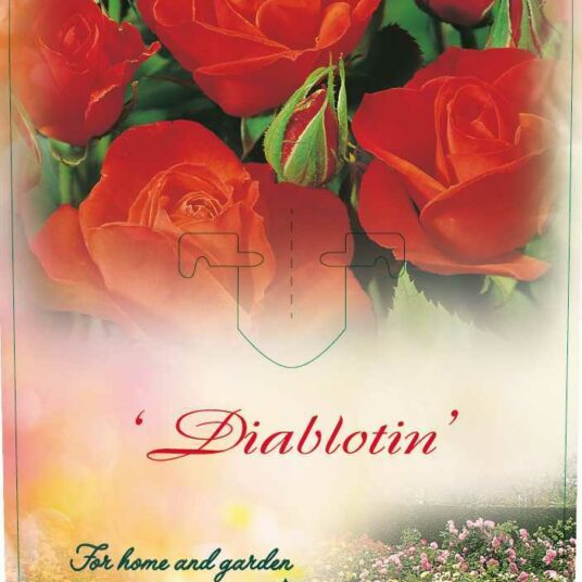 Rosa 'Diablotin' (= 'delpo')