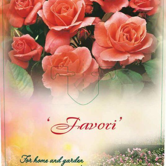 Rosa 'Favori'