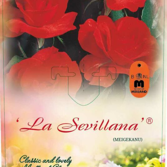 Rosa 'La Sevillana'® (= 'meigekanusar'®)