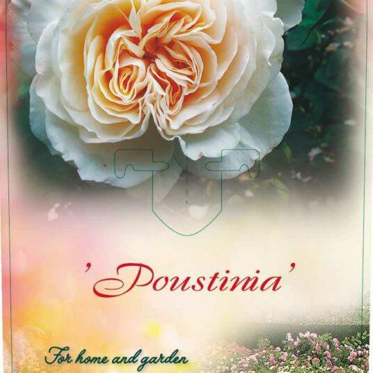 Rosa 'Poustinia'® (= 'orybie'®)