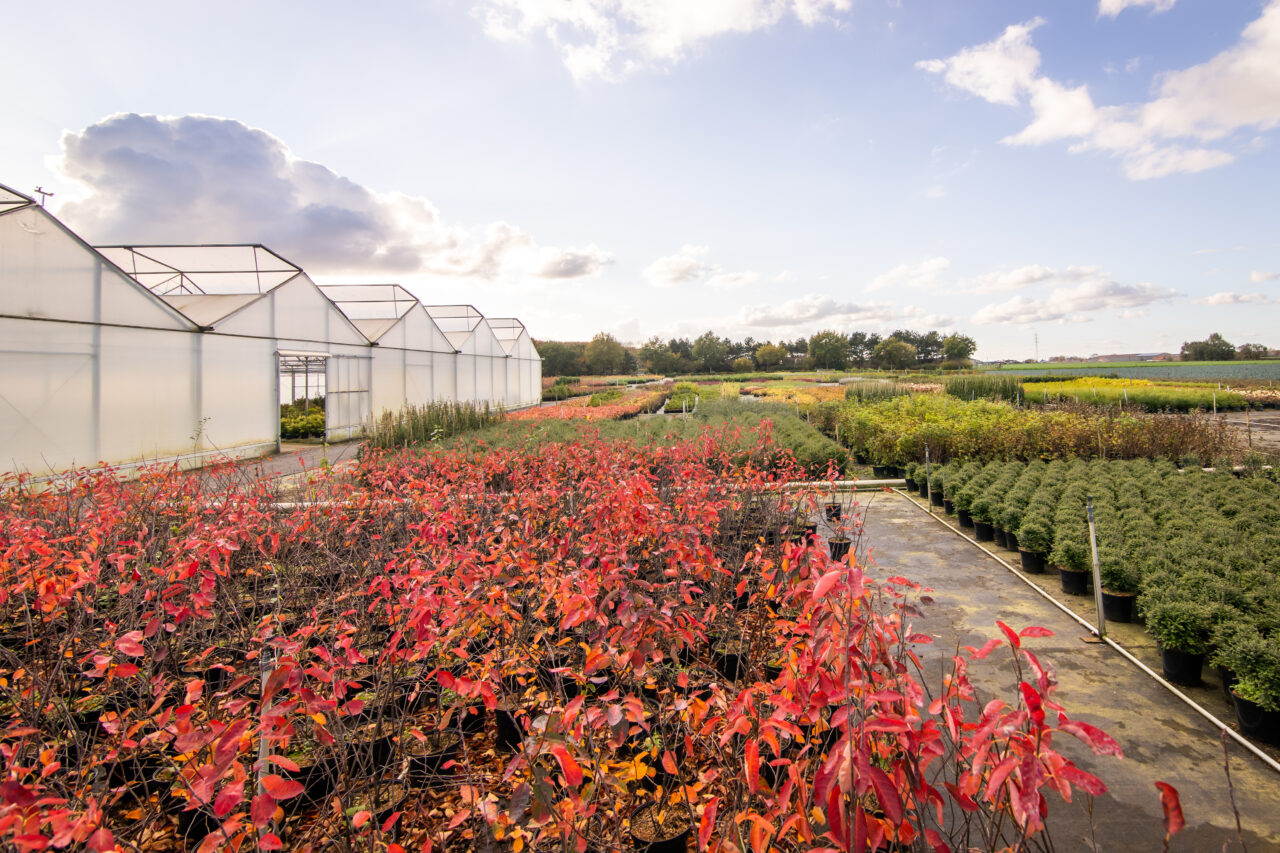 Bestel je planten en toebehoren